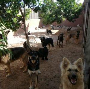 quienes somos - Tu Centro Canino Damián Machado