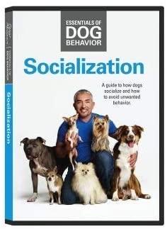 Cesar Millan - Socializar a tu perro