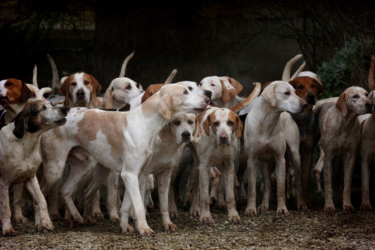 Socializar a tu perro