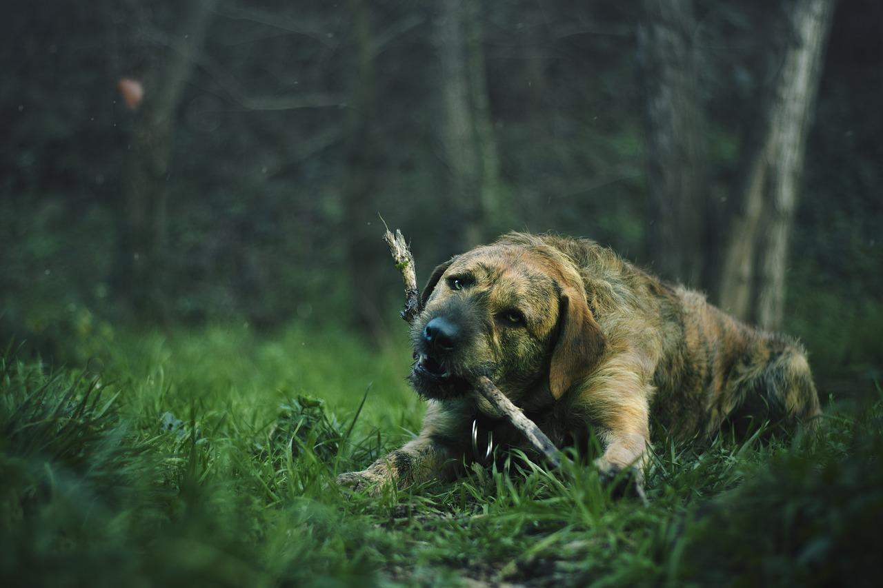 Perro lo muerde todo - Masticación destructiva