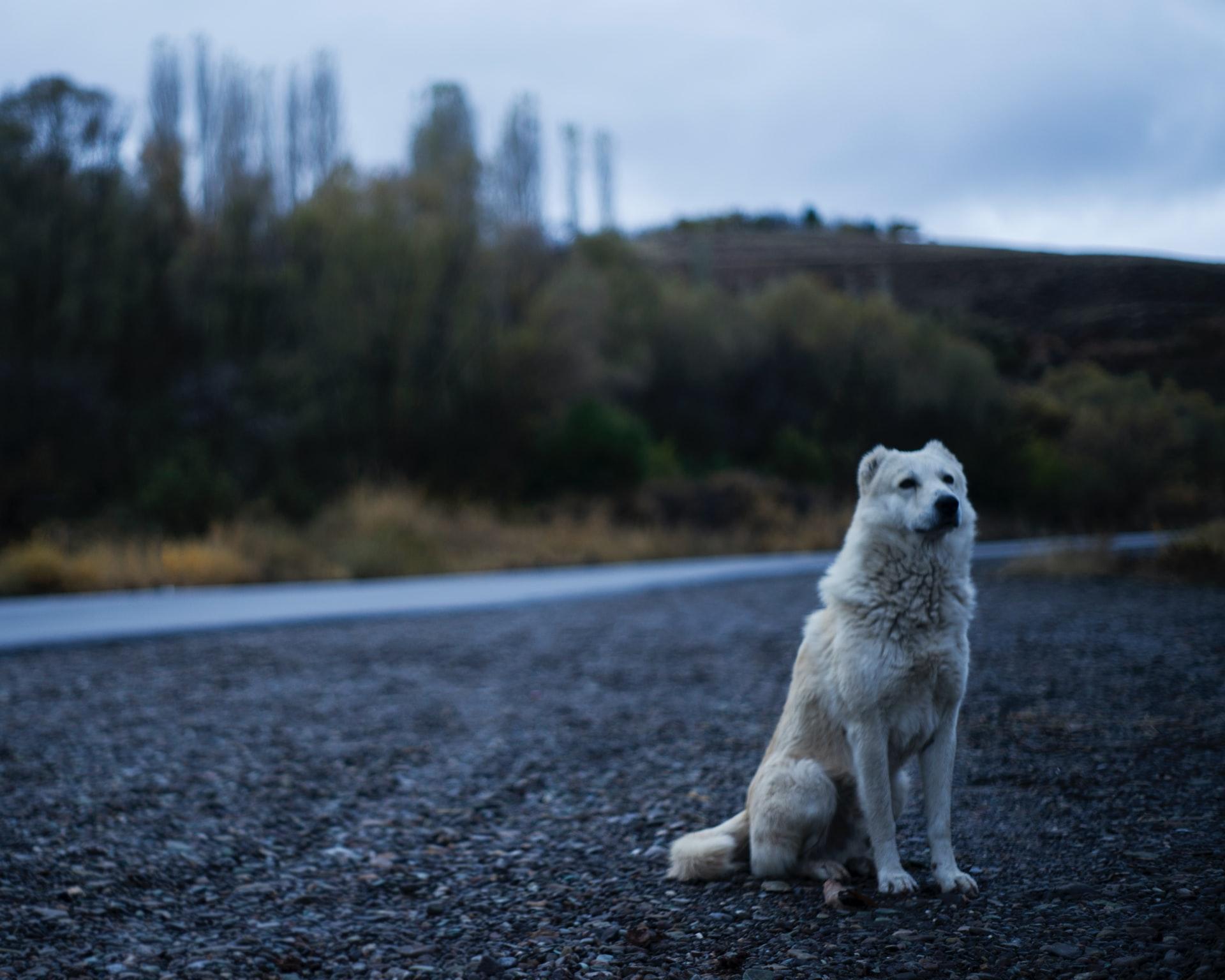 Adoptar un perro de refugio