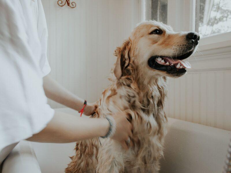 Cómo bañar a tu perro