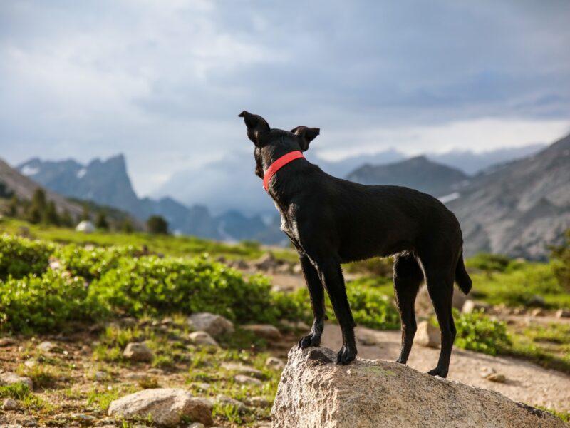El sentido del oído de los perros