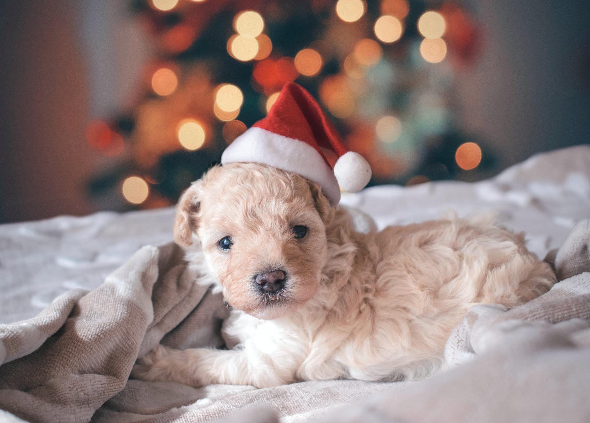 los perros no son un regalo