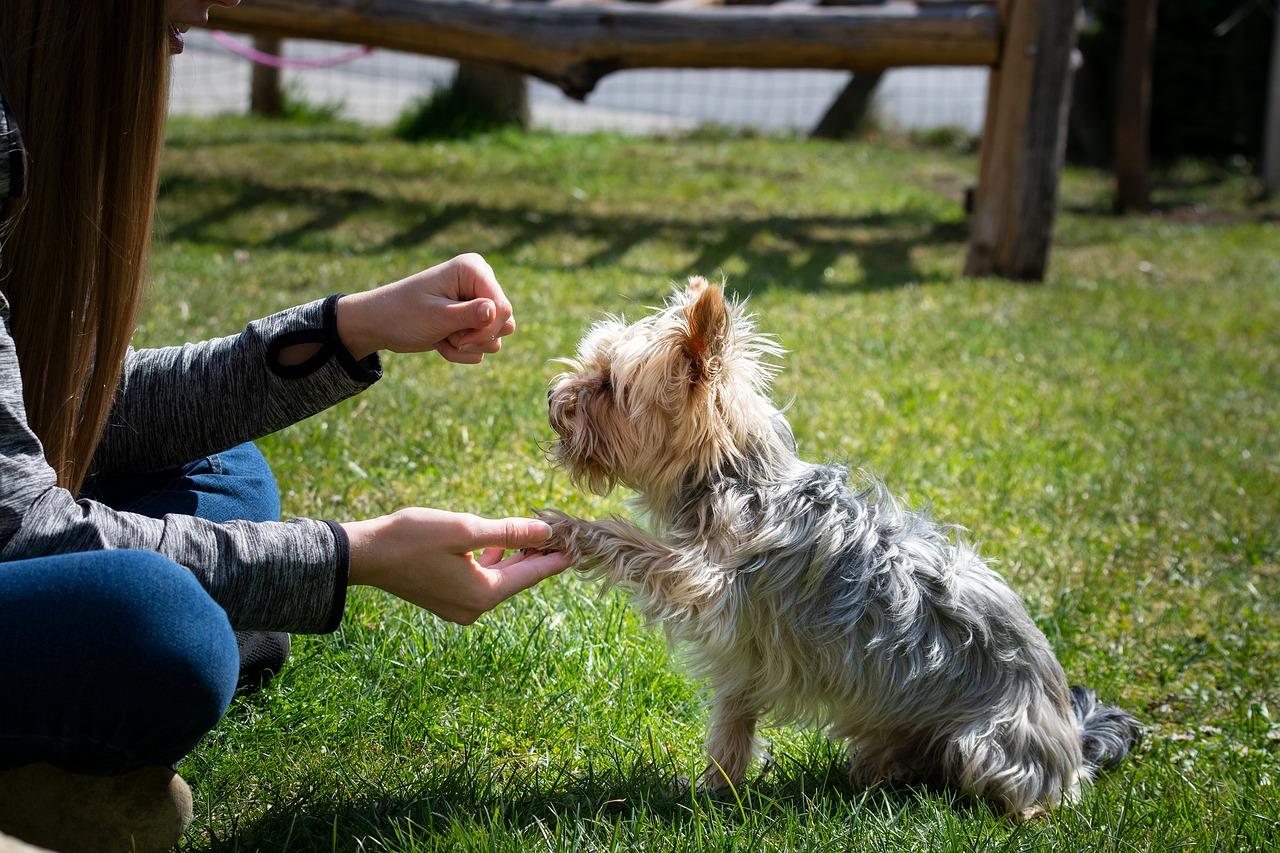 educación y adiestramiento canino