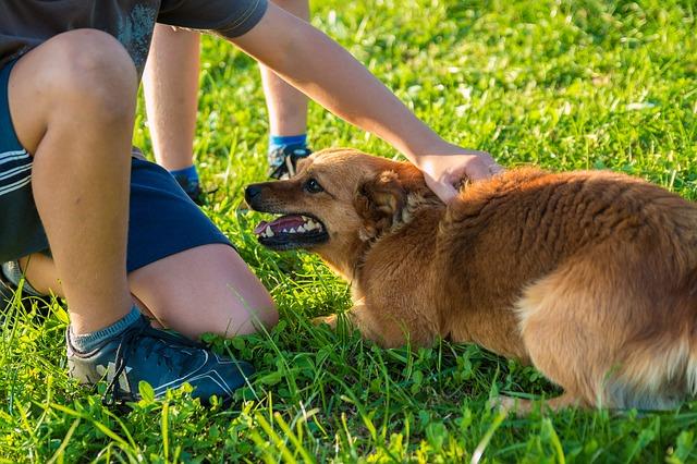 niño acaricia perro