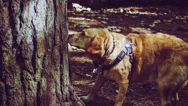 pasear a tu perro oler