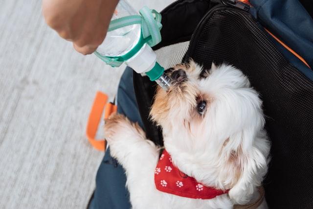 perro bebe agua
