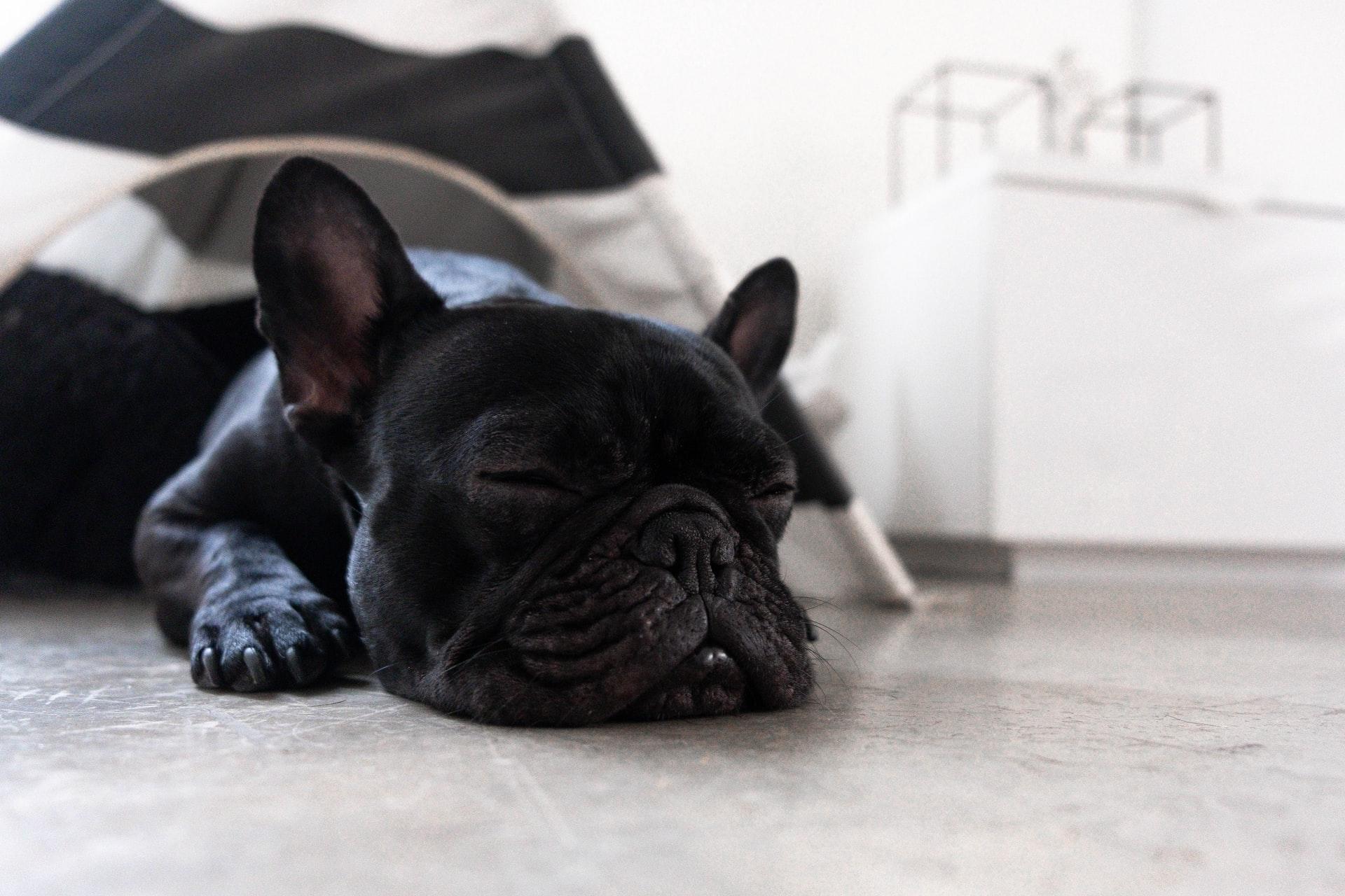 los perros sueñan