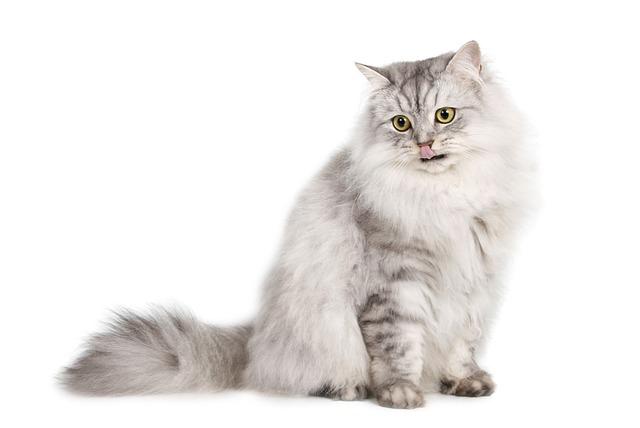Perros y mascotas - gato