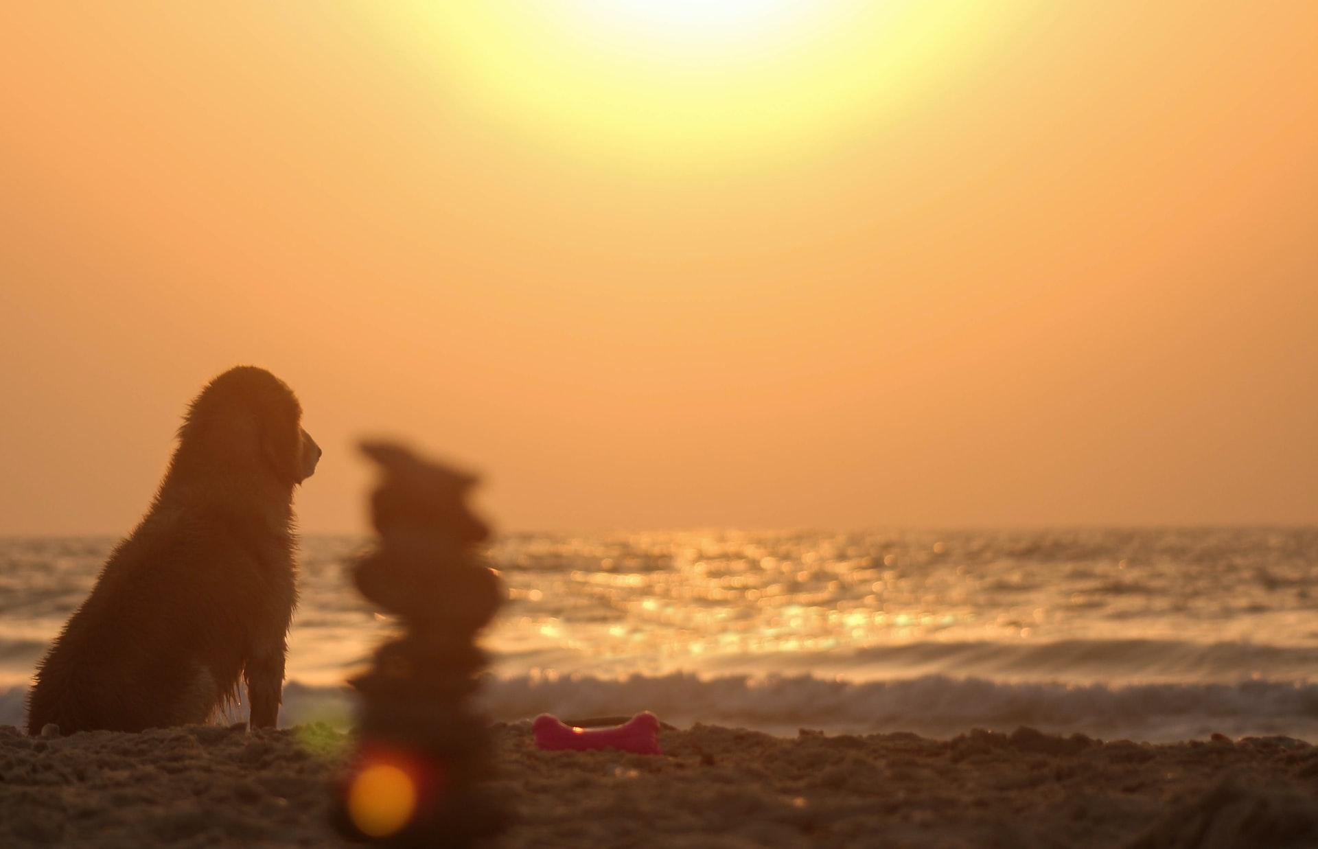 proteger a tu perro del calor