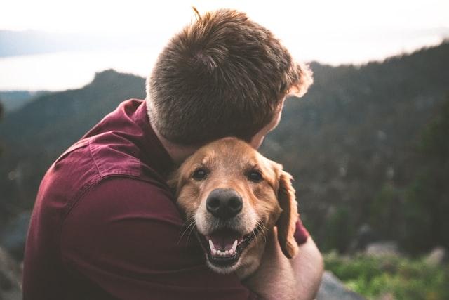 perros de apoyo emocional