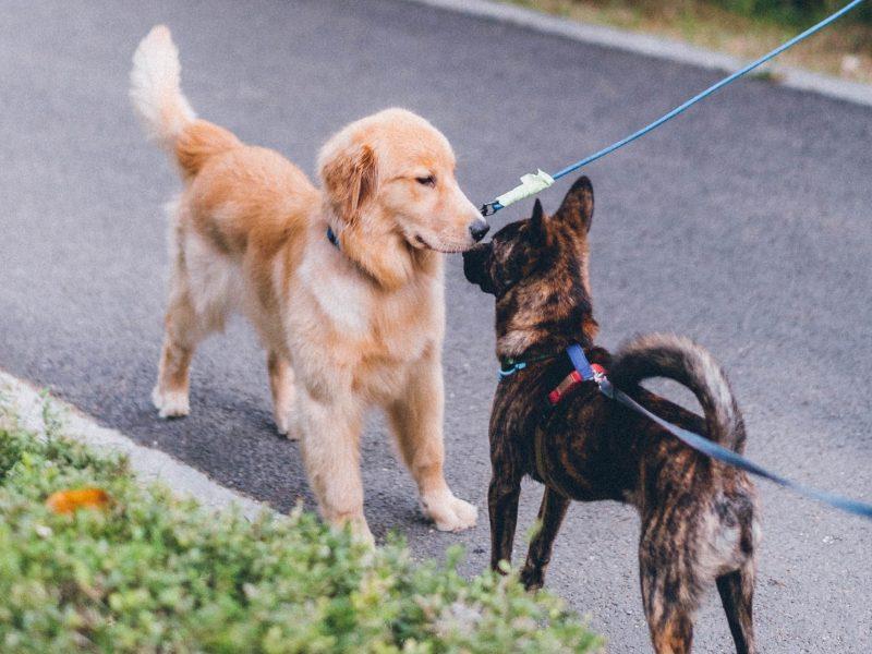 saludo entre perros