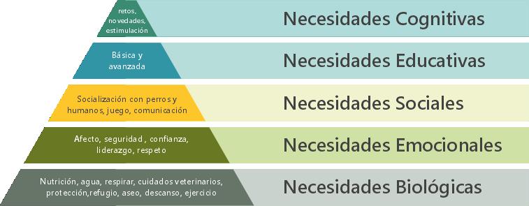 necesidades de los perros