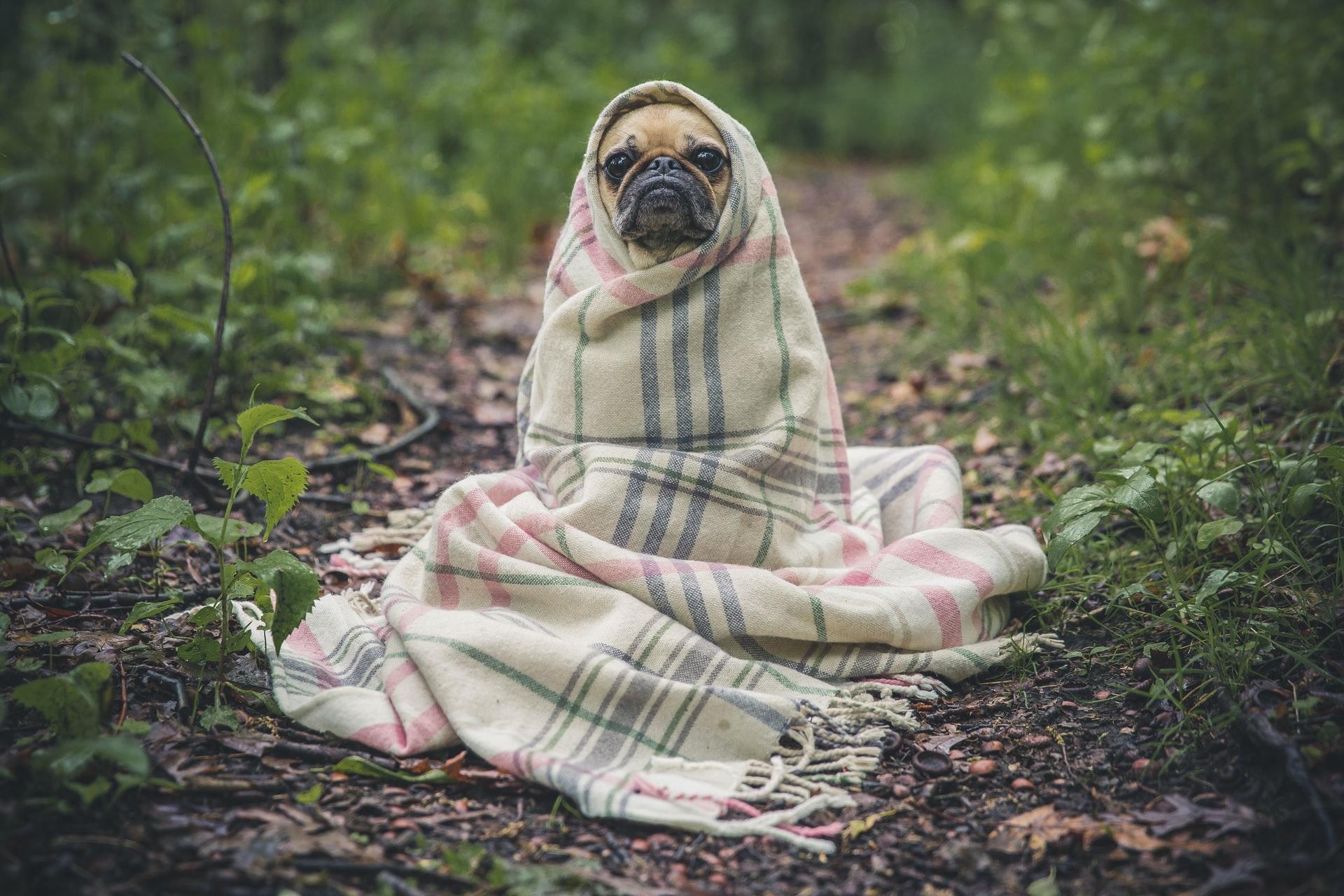 perros estornudan