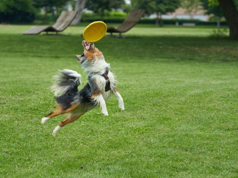 Disk dog un deporte canino